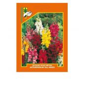 Snapdragon (Antirrhinum majus) mix