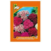 Sweet William (Dianthus barbatus) double, mixed