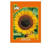Sunflower giant (Helianthus)