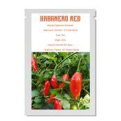 Habanero Red (10 seeds )