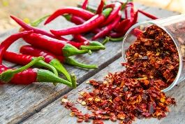 How to ...guide to be burned successfully !!! Grow chilli peppers now!